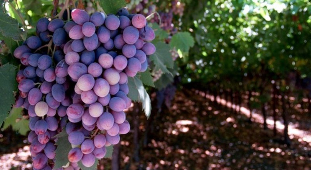 Nauka produkcji wina zupełnie za darmo
