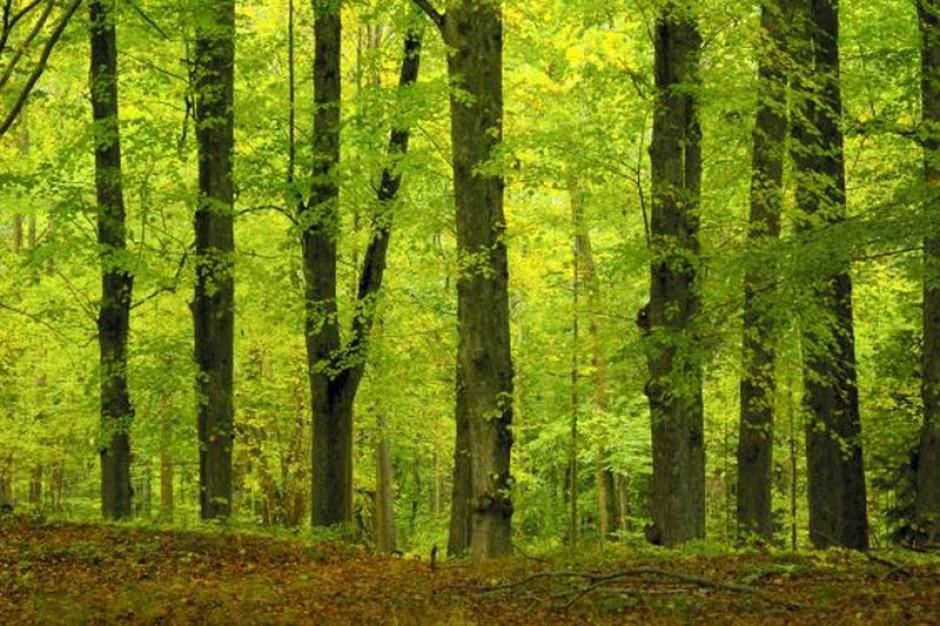 Chcesz dobrze zarabiać? Pracuj w lesie albo pod ziemią