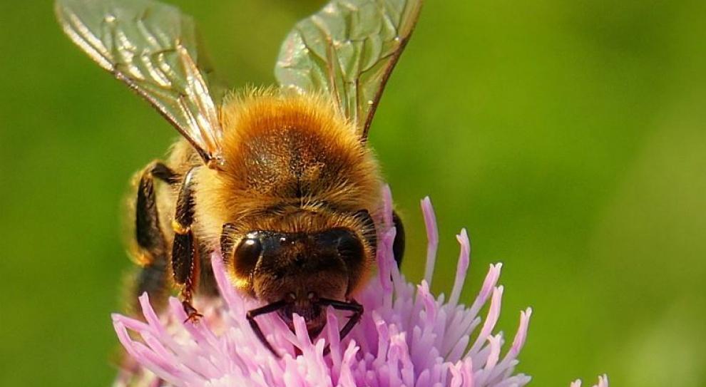 Pszczelarskie hobby pomoże zwalczyć bezrobocie
