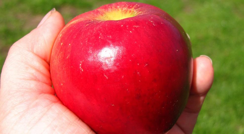 Prezes Fakro kupuje co tydzień dla pracowników od 2,5 do 3 ton jabłek