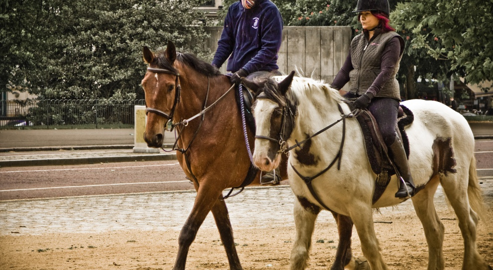 Płace w nietypowych zawodach. Ile zarabia trener koni, a ile doradca w żałobie?