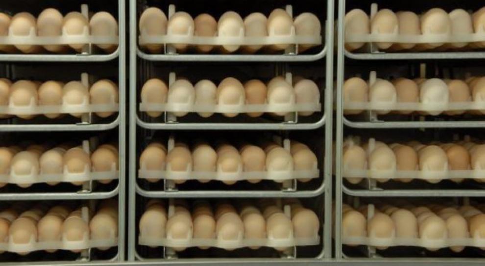 Przeciętnie zarabiający Polak za swoją pensję może kupić 7962 jaja