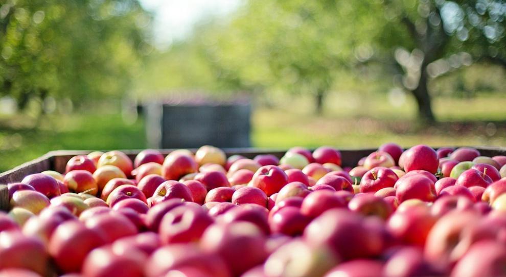 Nowe miejsca pracy w ŁSSE. Powstanie zakład przetwórstwa owocowo-warzywnego