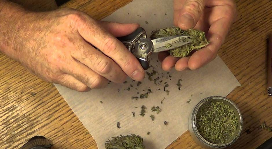 Marihuanowe przedsiębiorstwa szukają pracowników. Wiemy, ile można byłoby zarobić