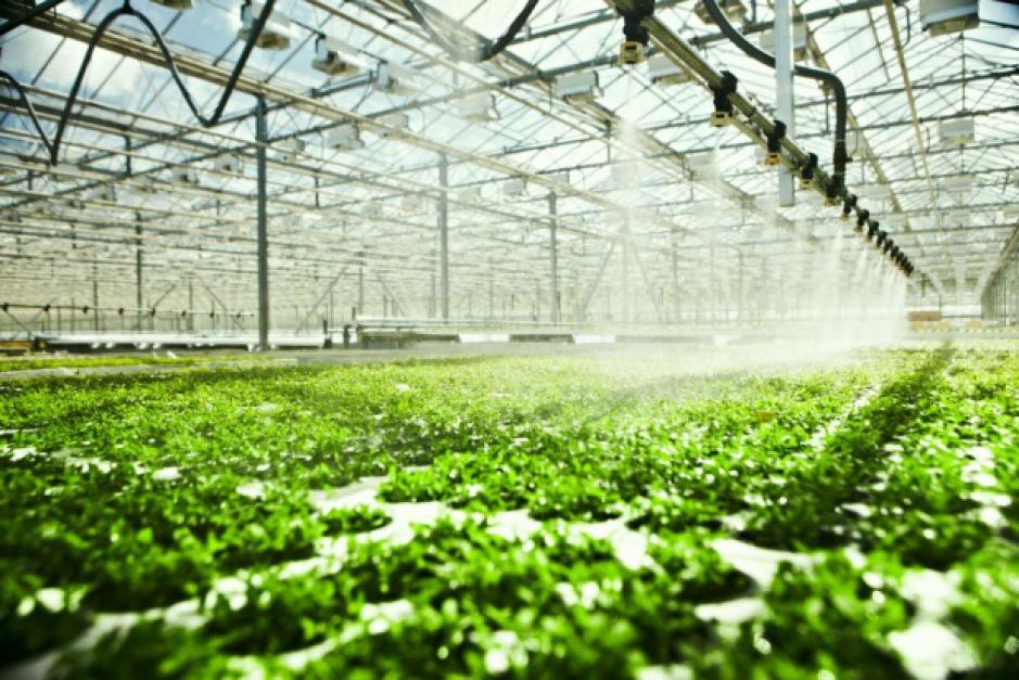 Robotyzacja rolnictwa: Japońskie roboty zajmą się hodowlą warzyw?