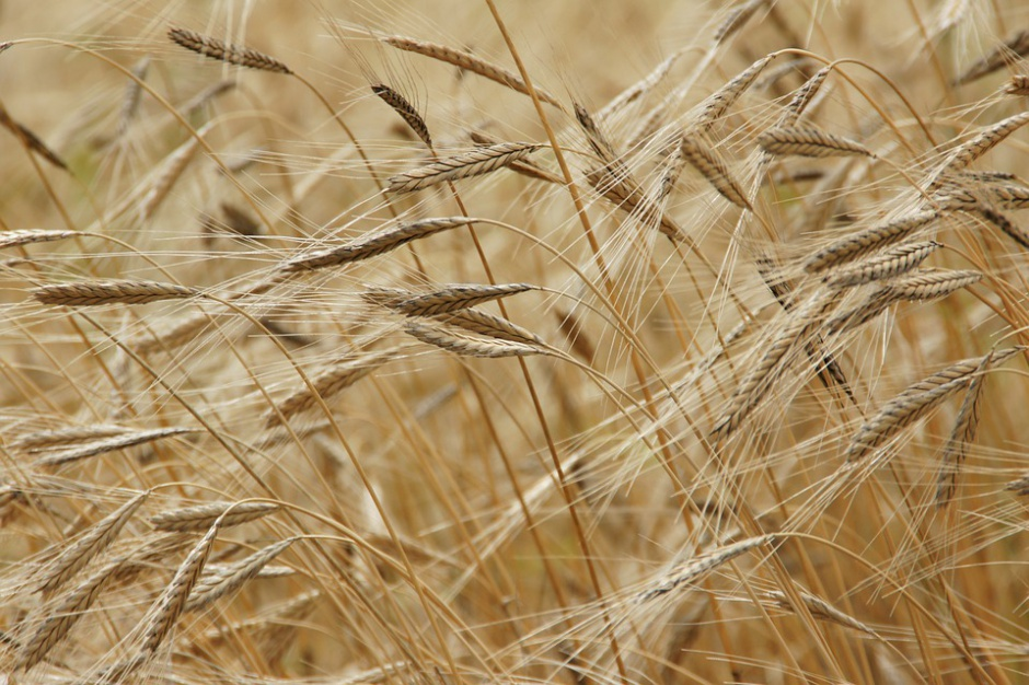 Nowa ustawa ogranicza zawód rolnika, za to daje władzę urzędnikom