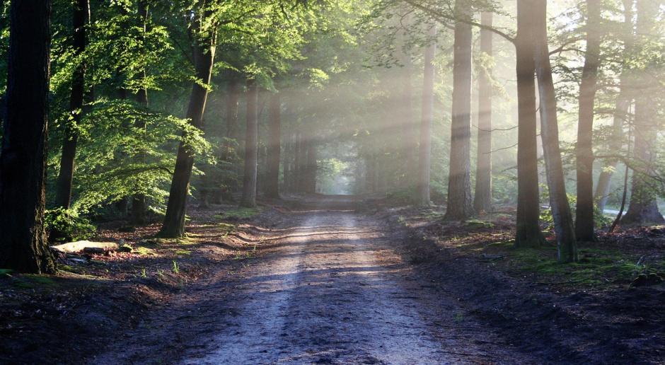 Podwyżki w Lasach Państwowych