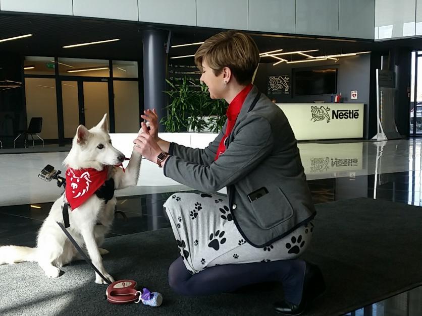 Pracownicy Nestlé Purina mogą przychodzić do biura z psem
