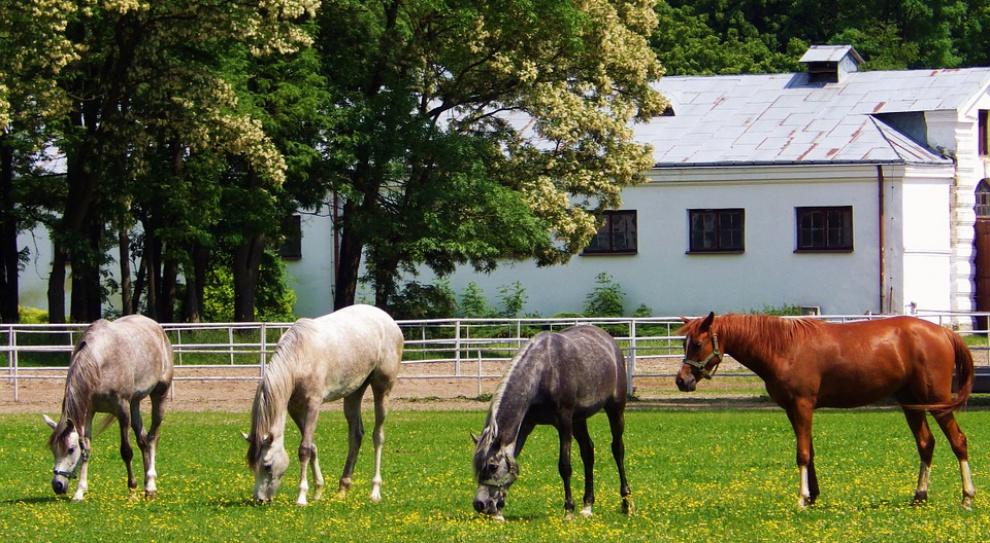Stadnina koni w Janowie potrzebuje prezesa. Ogłoszono konkurs