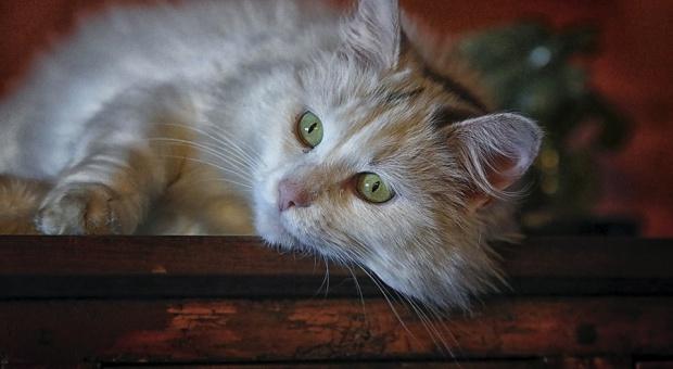 Wielka Brytania: Ministerstwo zatrudniło kota