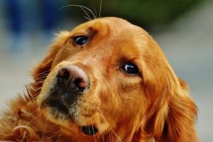 Zwierzęta w rekreacji, edukacji i terapii - nowy kierunek studiów