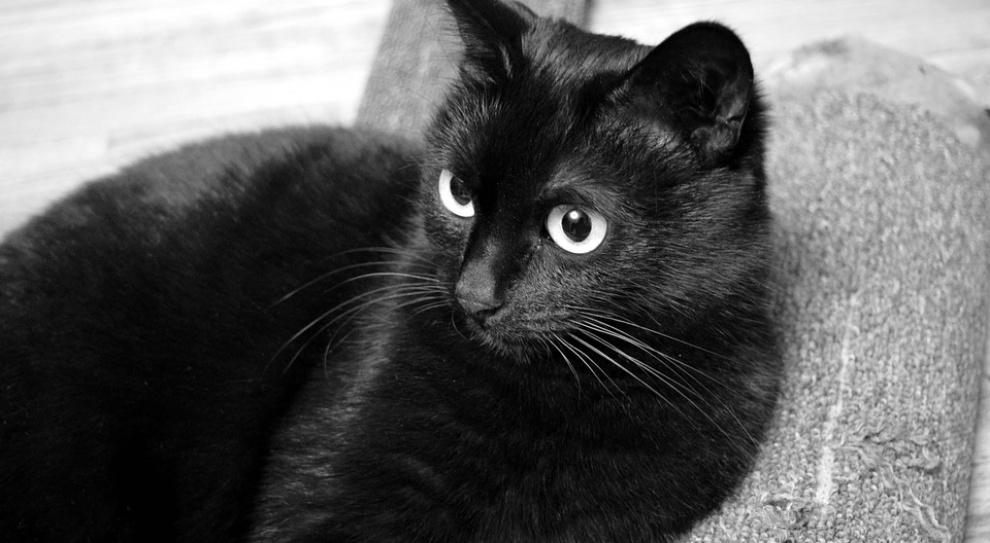 Szpital w Trzebnicy zatrudnił kota