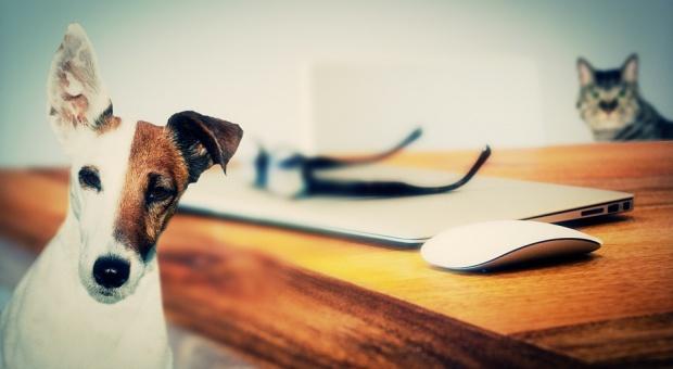 """Wielka Brytania, urlop: Właściciele zwierząt dostaną płatny urlop """"rodzicielski"""""""