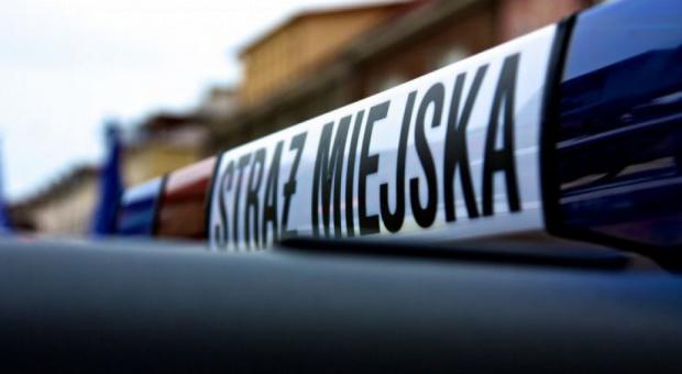 Będzin, straż miejska: Byli strażnicy miejscy oskarżeni o branie łapówek