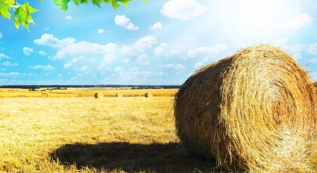 Rolnictwo, praca: Zarobki rolników prawie wcale nie rosną