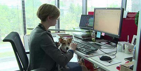 W Nestle Purina pracownicy pracują ze swoimi czworonożnymi pupilami. (fot. InfoWire)