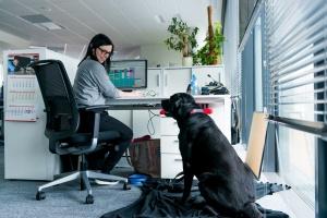 Do pracy z psem? Zwierzę w firmie to... samo zdrowie
