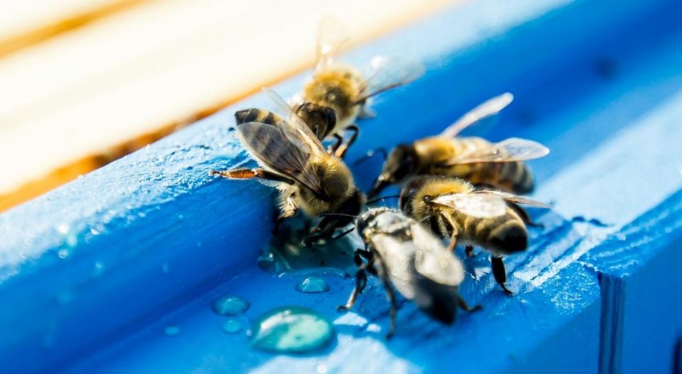 Pasieka w biurowcu: Kiedy kolega z pracy jest... pszczołą