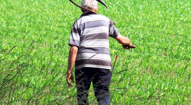 Wiek emerytalny: Rolnicy później przejdą na emeryturę? Rząd chce podnieść wiek o 5 lat