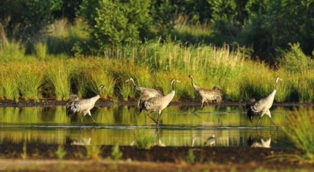 Podlaskie, Natura 2000: Firmy dostaną pieniądze na miejsca pracy na terenach chronionych