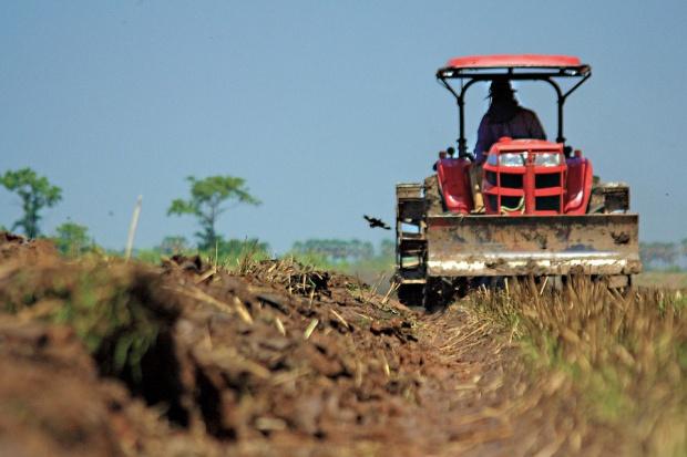 Bez pracowników sezonowych rolnictwo sobie nie poradzi