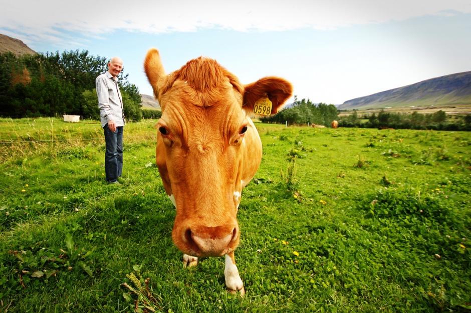 Emerytura: Rolnicy przejdą na emeryturę na dotychczasowych zasadach do 2020 r.?