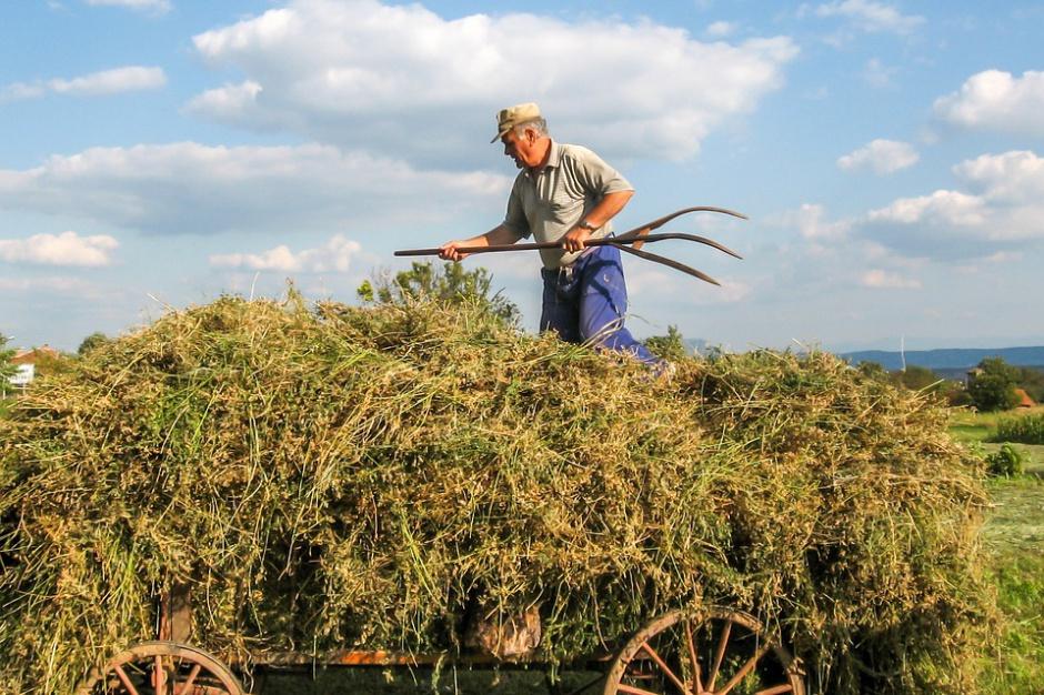 NSZZ Solidarność: Rolnicze związki zawodowe przeciwko CETA