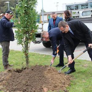 Pracownicy Winiary zasadzili drzewa