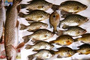 Brak chętnych do pracy w branży przetwórstwa rybnego