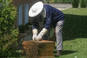 Praca pszczół jest warta 150 mld euro rocznie, a pszczelarzy?