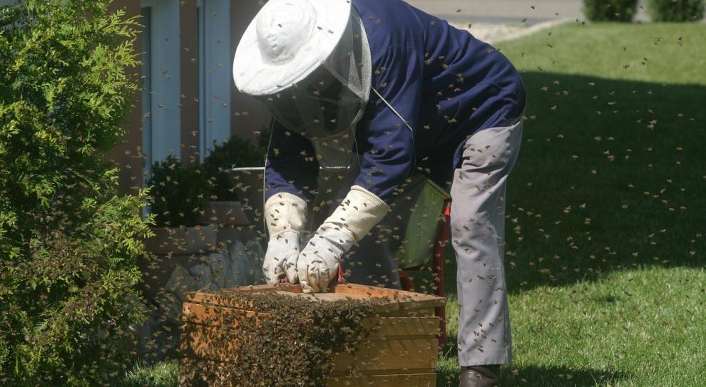 Praca, pszczoły: Zawodowych pszczelarzy w Polsce jest niewielu