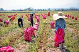 Nowe przepisy pomogą rolnikom w zatrudnianiu sezonowych pracowników
