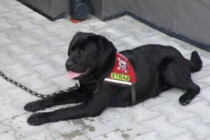 Wsparcie dla strażaków-ratowników pracujących z psami