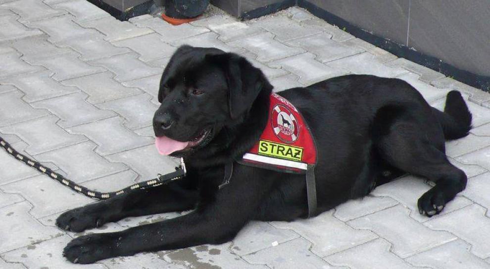 Małopolskie: Wsparcie dla strażaków-ratowników pracujących z psami