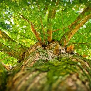 """""""Solidarność"""" leśników grozi protestem. W obronie drzew"""