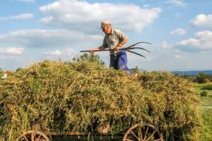 """""""Rolnicza"""" Solidarność chce zmian w przepisach dotyczących emerytur dla rolników. Co na to prezydent?"""