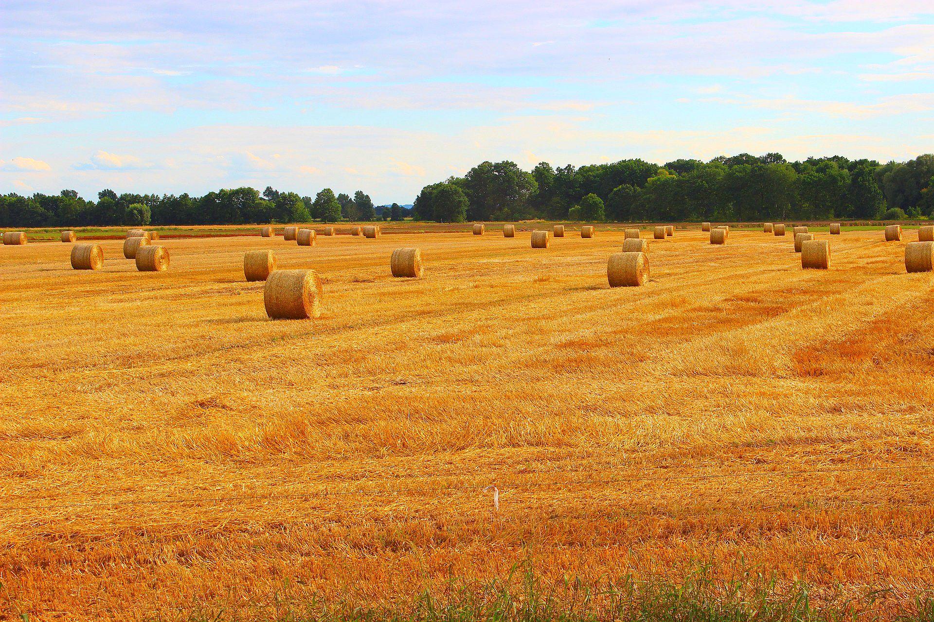 Najwyższy dług uzbierał się rolnikom, leśnikom i rybakom z Wielkopolski - blisko 79 milionów złotych (fot.pixabay)