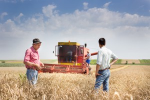 Ministerstwo otwiera nabór na radców rolnych