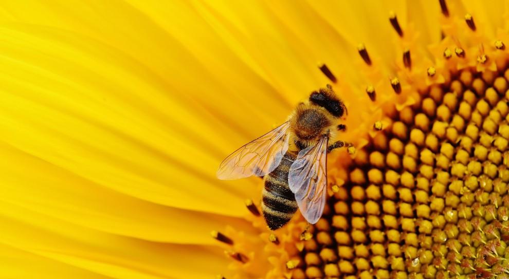 Pszczelarze dostaną pomoc finansową