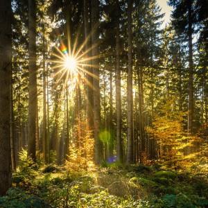 Białowieski Park Narodowy szuka dyrektora