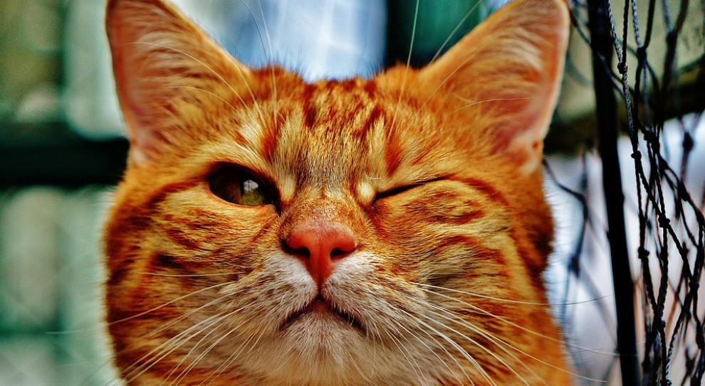 Klinika weterynaryjna z Dublina poszukuje głaskacza kotów