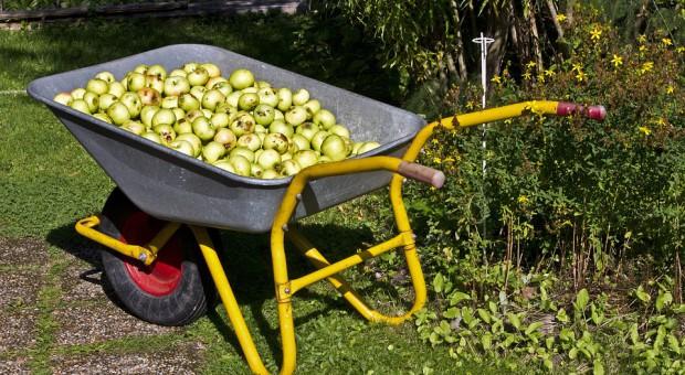 Ustawa o ubezpieczeniu społecznym rolników: Inna praca zarobkowa budzi kontrowersje związkowców