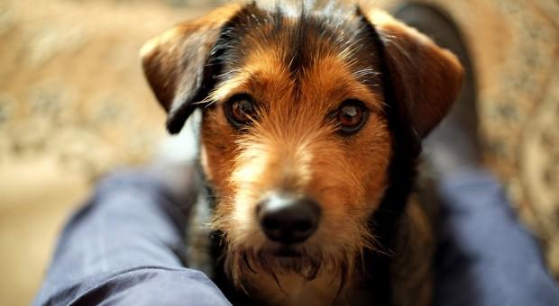 Będzie zakaz pracy ze zwierzętami dla osób, które się nad nimi znęcają