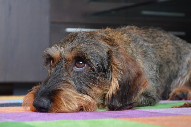 Zabierzesz psa do pracy? Nietypowa akcja w Bydgoszczy