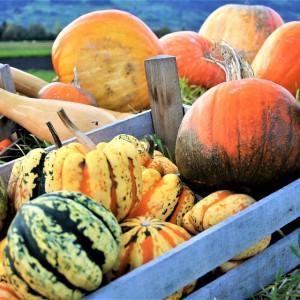 Pracownicy sezonowi mogą być zatrudnieni przez rolników nieubezpieczonych w KRUS
