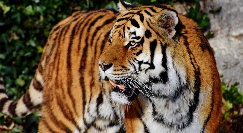 Sąd uniewinnił pracownika zoo we Wrocławiu od zarzutu niedopełnienia obowiązków