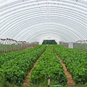 Pracownicy resortu rolnictwa i podległych mu instytucji dostali nagrody. 140 mln zł to niewiele?