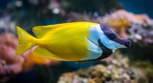 Matka szuka pracy dla syna: Może pilnować rybek w akwarium godzinami