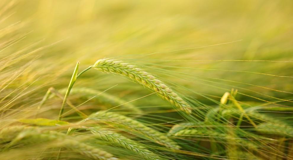 Rolnicy będą organizować się w spółdzielnie?