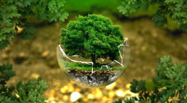 Start-upy: Dla innowacji ekologicznych kluczowa jest zmiana świadomości